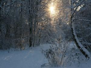 Los tibios rayos del sol iluminan el bosque nevado