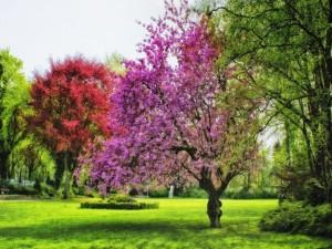 Hermosa primavera en un parque