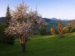 Árbol florecido en un campo verde
