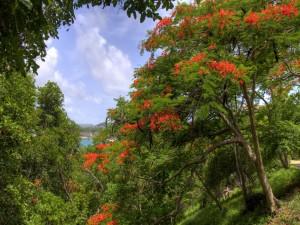 Flores rojas en los árboles de un bosque