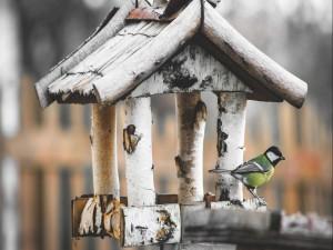 Pájaro en una casita de madera