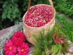 Flores junto a una cesta con arándanos rojos