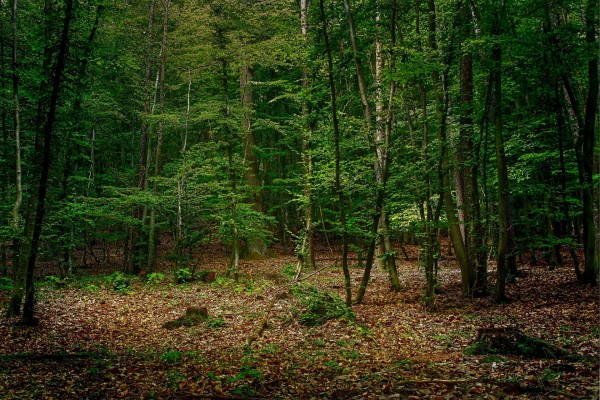 Un hermoso bosque