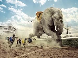 Elefante en una carrera de galgos