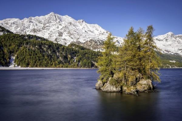 Árboles en la isleta del lago