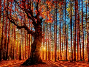 Un hermoso bosque iluminado por el sol