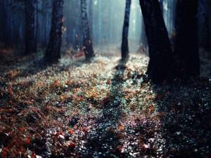 Luz sobre el suelo del bosque