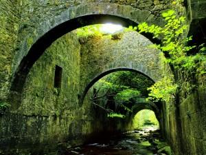 Bajo un puente de piedra