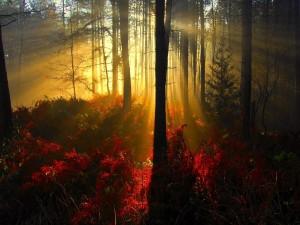 Luz penetrando en el interior de un bosque