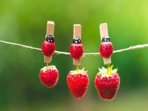 Fresas colgando de unas originales pinzas
