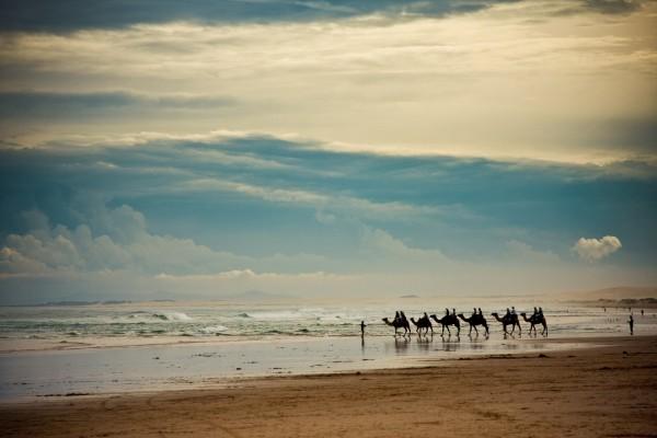 Caravana de camellos en una playa