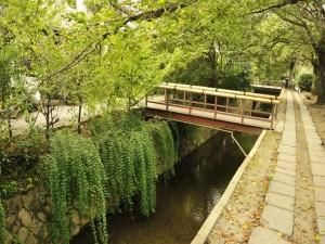 Pequeños puentes sobre el río
