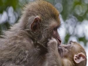 Mono con su hijito