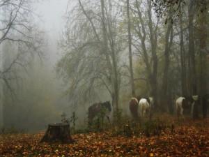 Caballos en un bosque con niebla