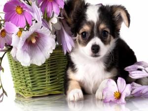 Perrito junto a una cesta con flores