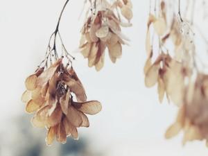 Hojas colgando de las ramas en invierno