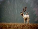 Pareja de ciervos