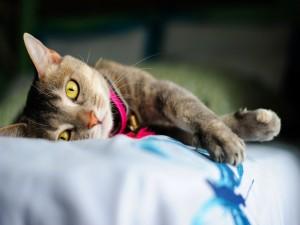 Gato de ojos amarillos tumbado sobre una cama