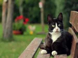 Gato sentado en un banco