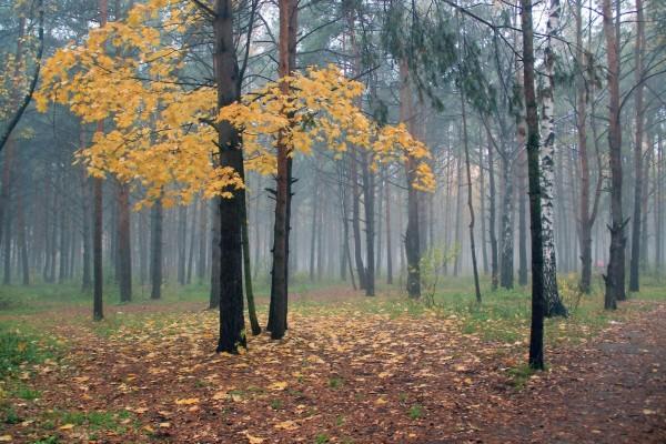 Niebla en un bosque otoñal