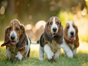 Tres perritos corriendo sobre la hierba verde
