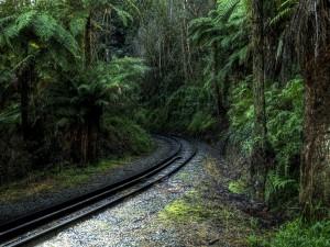 Vía de ferrocarril en la densa espesura de un bosque