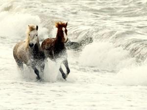 Dos caballos corriendo entre las olas del mar