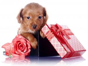 Cachorro en una caja de regalo