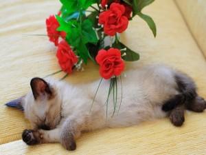 Gatito dormido junto a unas flores