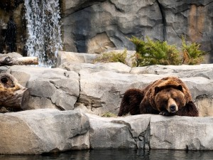 Oso viviendo en un zoo