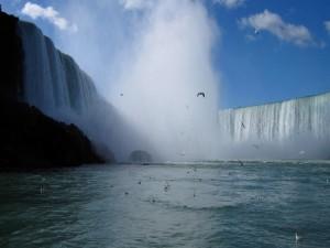 Aves en las cataratas del Iguazú (Argentina)
