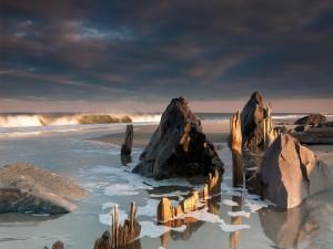 Rocas y troncos en la orilla de una playa