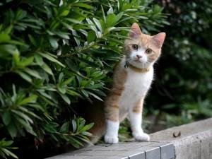 Un bonito gato doméstico entre las plantas