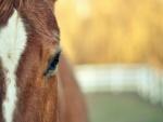 El ojo de un caballo