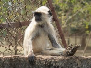 Mono sentado en una roca