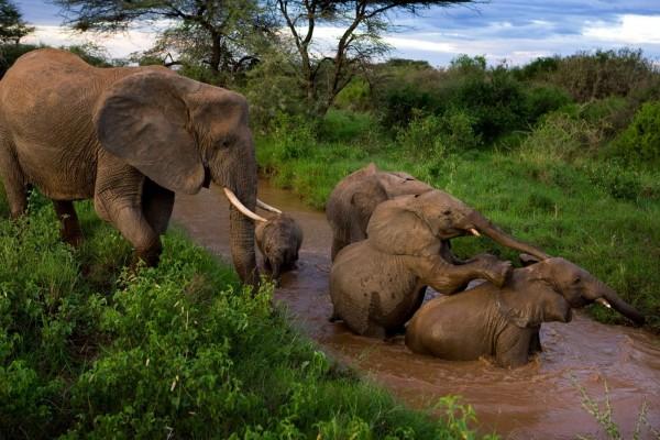 Jóvenes elefantes jugando en el río