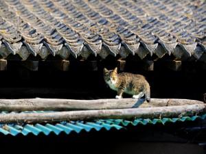 Gato en un tejado