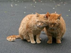 Dos gatos adormilados