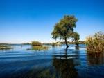 Árboesl y plantas en el agua