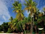 Descansando en una playa tropical