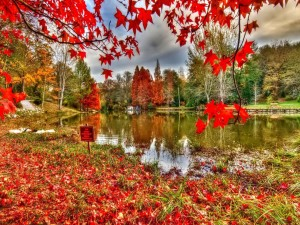 Alfombra de hojas rojas junto al lago