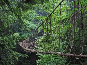 Frágil puente colgante en un bosque