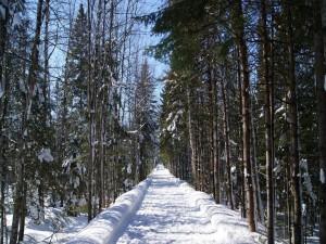 Camino cubierto de nieve junto a unos árboles