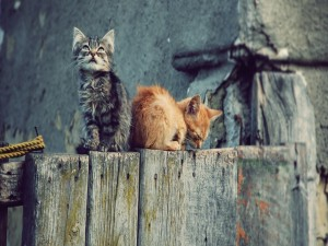 Gatitos callejeros sobre una valla de madera