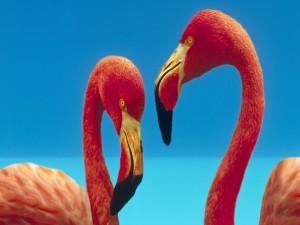 Dos flamencos