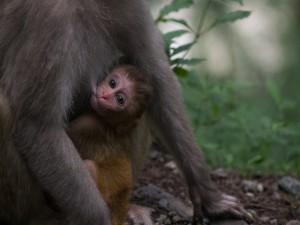 Mona dando de mamar a su bebé
