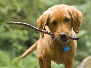 Cachorro con un palo en la boca