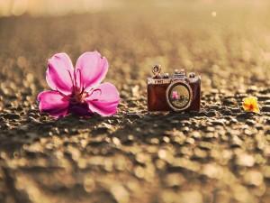 Flores junto a una pequeña cámara de fotos