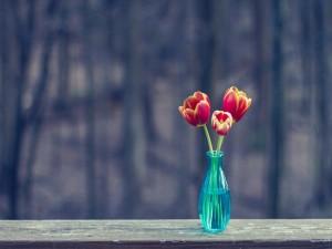 Tres tulipanes en un violetero azul