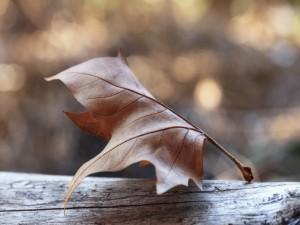 Hoja seca sobre un tronco